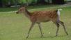 「日本の奈良公園の鹿さんに挨拶をしてみた結果」
